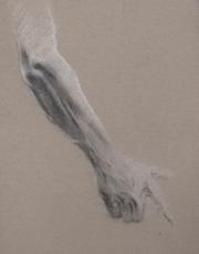 Lower arm study