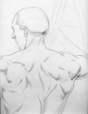 nude - sketch of male back structure