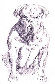 pooch sketch
