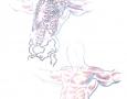 anatomy / skeleton sketch